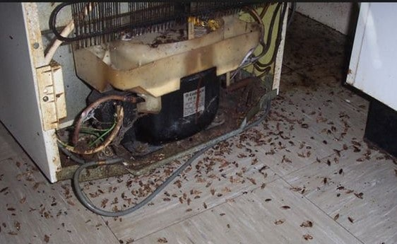 Cockroach bait placement in a kitchen