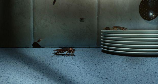 Cockroaches in restaurant